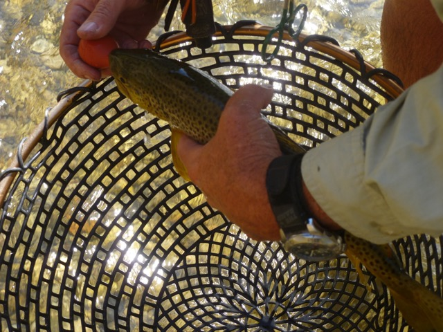 Fish in net healing waters lodge for Fly fishing near me