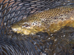 Fish-in-net[1]