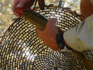 Hand fish net